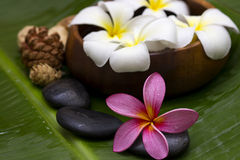 Red/pink frangipani. With spa concept Stock Photos