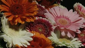 Red pink gerberas in colorful flower bouquet motion time lapse. Medium close up motion time lapse shot circling around a colorful bouquet of different colored stock video