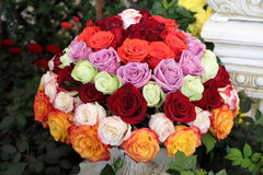 Red, Pink, Green, Orange, Purple Rose Flower Ball in Garden Royalty Free Stock Photo
