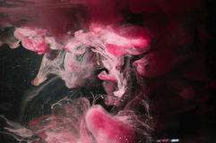 Red pink ink in water. Sunshine lighting. Dynamic movement of pa Royalty Free Stock Photography
