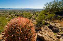 Colorful Cactus Stock Photography