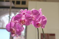 Red pink orchid Stock Photos