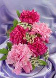 Red and pink peonies. In the vase Stock Images