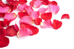 Red and pink rose petals isolated Stock Images