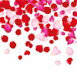 Red and pink rose petals  on white. Valentine background. Beauty fashion woman concept Stock Photo