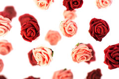 Red and pink roses Royalty Free Stock Images