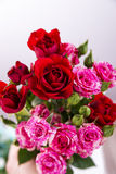 Red and pink roses. Background of flowers buds Stock Photography