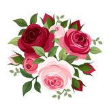 Red and pink roses. Royalty Free Stock Image