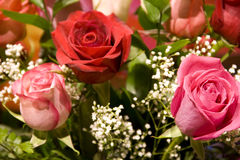 Red pink roses flowers royalty free stock photography