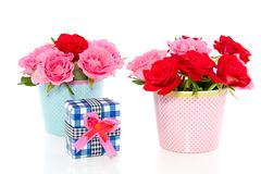 Red and pink roses with a gift Royalty Free Stock Images
