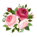 Red and pink roses.. Illustration of red and pink English roses, rose buds and leaves isolated on a white background Royalty Free Stock Images
