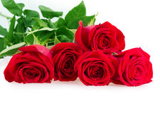 Red pink roses Stock Photo