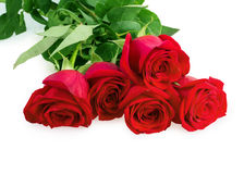 Red pink roses Royalty Free Stock Images