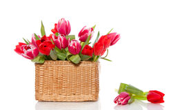 Red and pink tulips Royalty Free Stock Photos