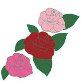 Red pink violet roses hand drawn. On white Royalty Free Stock Photography