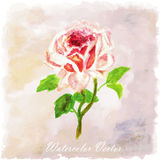 Red,pink Watercolor floral summer,spring background.colorful ros Royalty Free Stock Photography