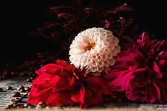 Red, pink and white flower on old planks. royalty free stock photo