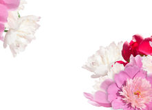Red, pink, white peonies. LIght flower background Stock Photography