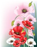 Wild poppies. Red, pink and white poppies with buds on pink and blue background Royalty Free Stock Image