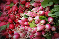 Red, Pink and White Radishes Royalty Free Stock Images