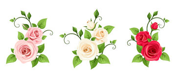 Red, pink and white roses. Vector set of three roses branches. Stock Photography