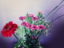 Red, pink and white spring flowers bouquet Royalty Free Stock Photo