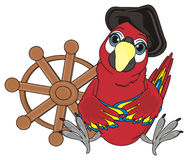 Red pirate bird. Pirate red parrot in black hat sit near the wooden steering wheel Royalty Free Stock Photography