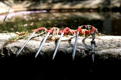 Red pitchfork over a stone wall stock image