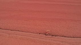 Red planet landscape mars textured surface. Red planet landscape. Mars textured surface. Desert land stock footage