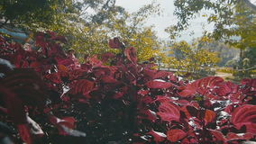 Red plant against the background of greenery stock footage