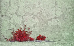 Red Plant in Concrete Wall Stock Photos