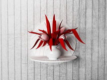 Red plant on the shelf, Royalty Free Stock Images