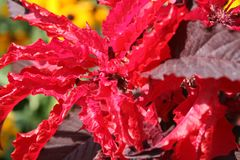 Red plant in the sun stock photography