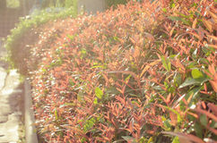 Red plant in sunset counterlight and flare light Royalty Free Stock Photos