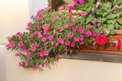Red plant on windowsill outdoor in cafe. traditional European coffeehouse with green plants. decoration of an old house facade. fl Stock Photo