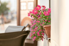 Red plant on windowsill outdoor in cafe. traditional European coffeehouse with green plants. decoration of an old house facade. fl Stock Photos