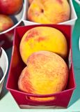 Red plastic box with two ripe, organic peaches Stock Image