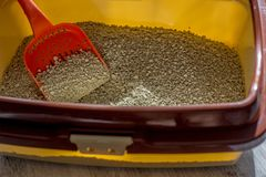 Red plastic scoop with the cat litter in a box. royalty free stock photography