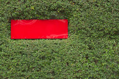Red plastic sign built into green plant wall background Royalty Free Stock Photos