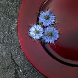 Red plate and blue flowers Stock Image