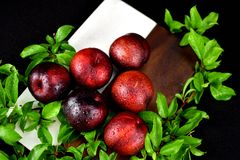 6 Red Plum arrangement stock photography