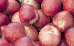 Red Plum background Stock Image