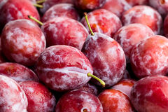 Red plum. Closeup detail focus Royalty Free Stock Photography
