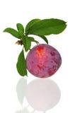 Red plum Stock Photos