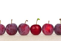 Red plum Royalty Free Stock Images