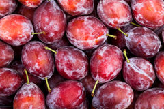 Red plum. Texture tile pattern Royalty Free Stock Photo