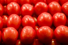 Red Plum Tomatoes Royalty Free Stock Photo