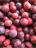 Red Plum royalty free stock photos