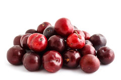 Red plum on white background Royalty Free Stock Image