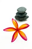 Red plumeria Stock Image